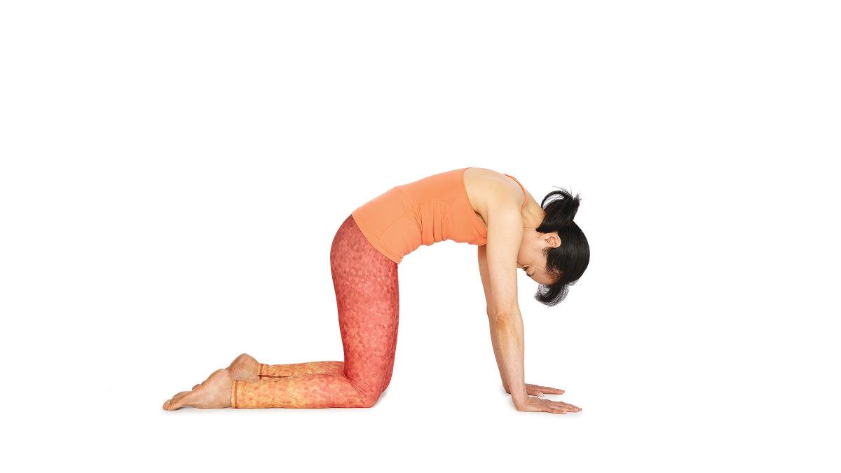 yoga_kucing